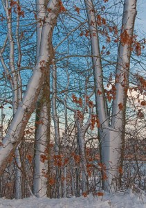 Web_East Reservoir through Snow Trees-jdimattia_jpg