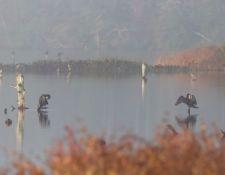 Bells-Neck-bird-walk-by-Gerry-Beetham-12Oct2021-22