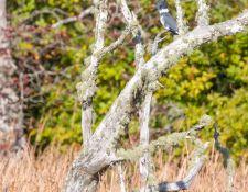 Bells-Neck-bird-walk-by-Gerry-Beetham-12Oct2021-43