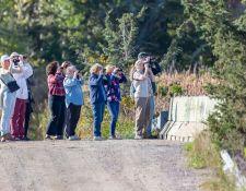 Bells-Neck-bird-walk-by-Gerry-Beetham-12Oct2021-44