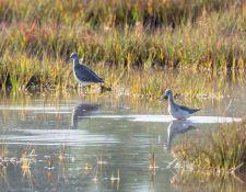 Bells-Neck-bird-walk-by-Gerry-Beetham-12Oct2021-45