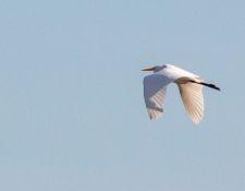 Bells-Neck-bird-walk-by-Gerry-Beetham-12Oct2021-48