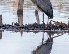 Bells-Neck-bird-walk-by-Gerry-Beetham-12Oct2021-52