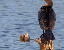 Bells-Neck-bird-walk-by-Gerry-Beetham-14Oct2021-20