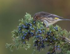 Bells-Neck-bird-walk-by-Gerry-Beetham-14Oct2021-22