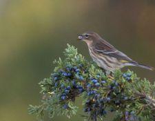 Bells-Neck-bird-walk-by-Gerry-Beetham-14Oct2021-23