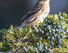 Bells-Neck-bird-walk-by-Gerry-Beetham-14Oct2021-24