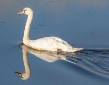 Bells-Neck-bird-walk-by-Gerry-Beetham-14Oct2021-25