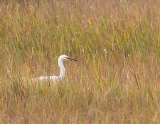 Bells-Neck-bird-walk-by-Gerry-Beetham-14Oct2021-28