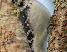 web-Bells-Neck-birding-by-Gerry-Beetham-28Sept2021-24