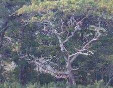 web-Bells-Neck-birding-by-Gerry-Beetham-28Sept2021-28