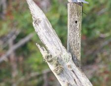 web-Bells-Neck-birding-by-Gerry-Beetham-28Sept2021-30