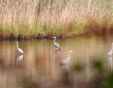 web-Bells-Neck-birding-by-Gerry-Beetham-28Sept2021-34
