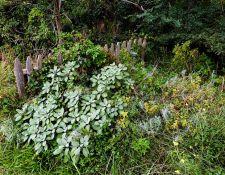web-Bnd-Brk-Hatch-House-hike-by-Nancy-Graupner-29Sept2021-33