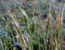 web-PBW-plant-walk-photos-by-Nancy-Graupner-8Sept2021-44