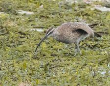 web-Trull-RR-bird-walk-by-Gerry-Beetham-10Aug2021-16