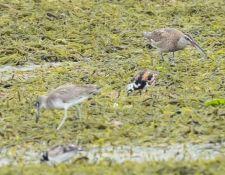 web-Trull-RR-bird-walk-by-Gerry-Beetham-10Aug2021-18