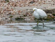 web-Trull-RR-bird-walk-by-Gerry-Beetham-10Aug2021-19