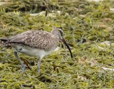 web-Trull-RR-bird-walk-by-Gerry-Beetham-10Aug2021-22