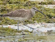 web-Trull-RR-bird-walk-by-Gerry-Beetham-10Aug2021-25