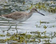 web-Trull-RR-bird-walk-by-Gerry-Beetham-10Aug2021-31