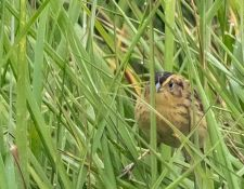 web-Trull-RR-bird-walk-by-Gerry-Beetham-10Aug2021-33