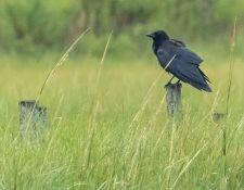 web-Trull-RR-bird-walk-by-Gerry-Beetham-10Aug2021-36