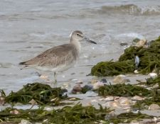 web-Trull-RR-bird-walk-by-Gerry-Beetham-10Aug2021-37