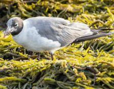 web-Trull-RR-bird-walk-by-Gerry-Beetham-7Aug202121