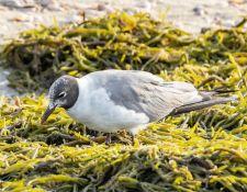 web-Trull-RR-bird-walk-by-Gerry-Beetham-7Aug202122