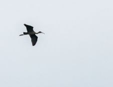 web-Trull-RR-bird-walk-by-Gerry-Beetham-7Aug202134