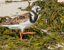 web-Trull-RR-bird-walk-by-Gerry-Beetham-7Aug202143