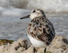 web-Trull-RR-bird-walk-by-Gerry-Beetham-7Aug202148
