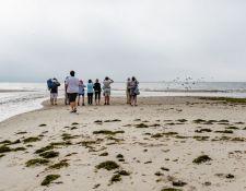 web-Trull-RR-bird-walk-by-Gerry-Beetham-12Aug2021-05