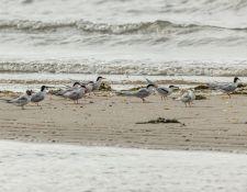 web-Trull-RR-bird-walk-by-Gerry-Beetham-12Aug2021-17