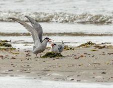 web-Trull-RR-bird-walk-by-Gerry-Beetham-12Aug2021-19