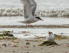 web-Trull-RR-bird-walk-by-Gerry-Beetham-12Aug2021-20