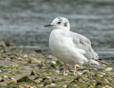 web-Trull-RR-bird-walk-by-Gerry-Beetham-12Aug2021-21