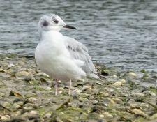 web-Trull-RR-bird-walk-by-Gerry-Beetham-12Aug2021-22