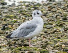 web-Trull-RR-bird-walk-by-Gerry-Beetham-12Aug2021-24