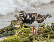web-Trull-RR-bird-walk-by-Gerry-Beetham-12Aug2021-27