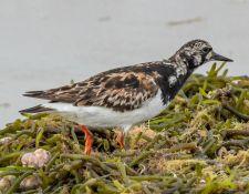 web-Trull-RR-bird-walk-by-Gerry-Beetham-12Aug2021-28