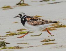 web-Trull-RR-bird-walk-by-Gerry-Beetham-12Aug2021-29