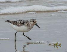web-Trull-RR-bird-walk-by-Gerry-Beetham-12Aug2021-30