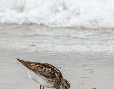 web-Trull-RR-bird-walk-by-Gerry-Beetham-12Aug2021-35