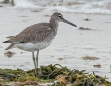 web-Trull-RR-bird-walk-by-Gerry-Beetham-12Aug2021-36