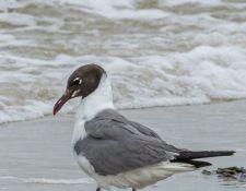 web-Trull-RR-bird-walk-by-Gerry-Beetham-12Aug2021-40