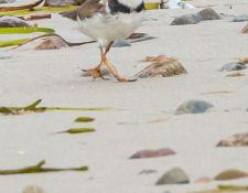 web-Trull-RR-bird-walk-by-Gerry-Beetham-12Aug2021-43