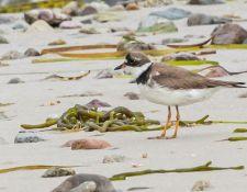 web-Trull-RR-bird-walk-by-Gerry-Beetham-12Aug2021-44