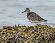 web-Trull-RR-bird-walk-by-Gerry-Beetham-12Aug2021-47